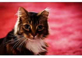 猫,猫,宠物,艺术的,油,绘画,壁纸,