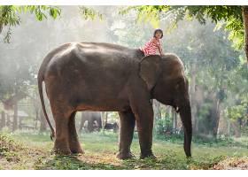 儿童,女孩,小的,女孩,亚洲的,大象,壁纸,