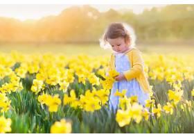 儿童,女孩,花,深度,关于,领域,夏天,水仙花,黄色,花,小的,女孩,壁