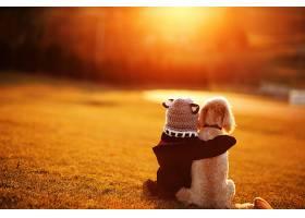 儿童,狗,帽子,日落,深度,关于,领域,壁纸,