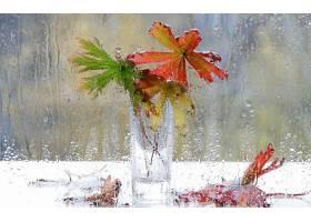 雨点,壁纸,(26)