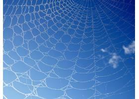 蜘蛛,网,壁纸,(70)