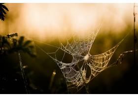 蜘蛛,网,深度,关于,领域,壁纸,
