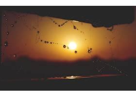 蜘蛛,网,露水,滴,巨,太阳,日落,深度,关于,领域,壁纸,