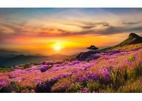 日出,自然,风景,紫色,花,壁纸,