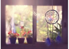 仍然,生活,阳光,深度,关于,领域,捕梦网,壁纸,