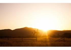 人,日落,风景,壁纸,