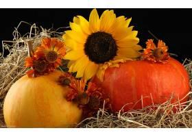仍然,生活,秋天,南瓜,干草堆,向日葵,黄色,花,壁纸,