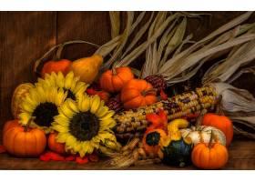 仍然,生活,秋天,南瓜,葫芦,向日葵,小麦,玉米,壁纸,