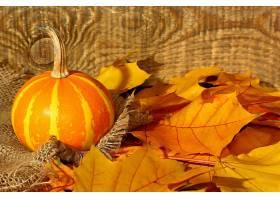 仍然,生活,南瓜,叶子,秋天,壁纸,
