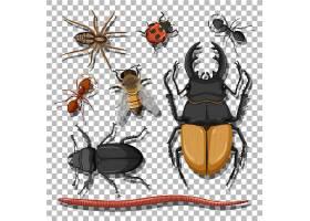 昆虫动物主题插画设计