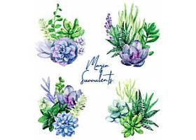 绿色天然多肉植物花卉叶子矢量装饰插画设计