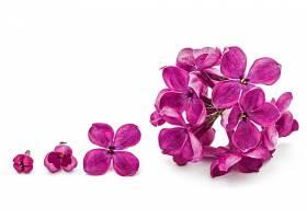 紫色的花朵