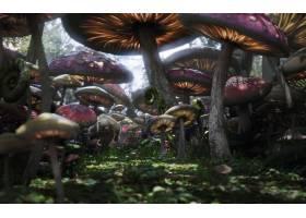 电影,爱丽丝,在,仙境,(2010年),爱丽丝,在,仙境,森林,魔法,幻想,
