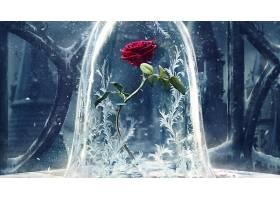 电影,美人,和,野兽,(2017年),玫瑰,红色,玫瑰,花,壁纸,