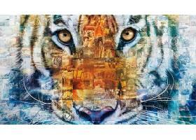 电影,生活,关于,Pi,眼睛,艺术的,老虎,拼贴,壁纸,