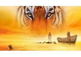 电影,生活,关于,Pi,老虎,眼睛,壁纸,