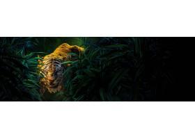电影,丛林,书,(2016年),丛林,书,动物,特写镜头,希尔,可汗,老虎,