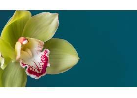 盛开的花朵的美丽特写_1255884301