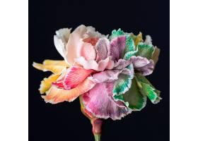 盛开的花朵的美丽特写_1255884601