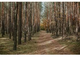 秋天云杉林中一条无人居住的小路的美丽照片_850737101