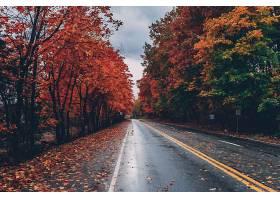 秋天被五颜六色的树叶包围的道路_784176001