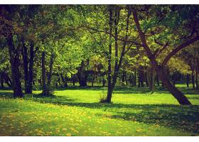 种草的森林_94620301