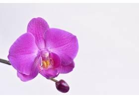 紫兰花的特写镜头_91985001