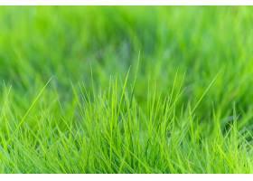 自然景观轻度绿色植物植被_111888901