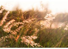 自然界中生长的野草_308152101