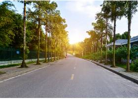 这条路在树林里_119402101