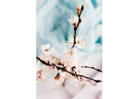 野生杏树的花枝在花瓶中开春开花_503011901