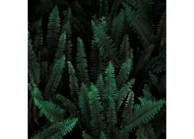 野生蕨类的灌木丛_243692701