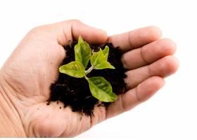 长着绿色嫩芽的手_96978201