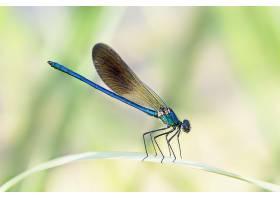 阳光下花园中一只蓝色菊花在树叶上的特写_1099089301