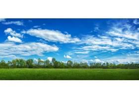 阳光和多云的天空下覆盖着青草和树木的田野_985249601