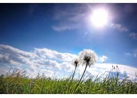 阳光明媚的日子里草地上的蒲公英_94584501