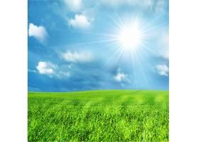 阳光明媚的绿色田野_94719101