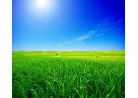 阳光照耀下的绿色田野_94715501