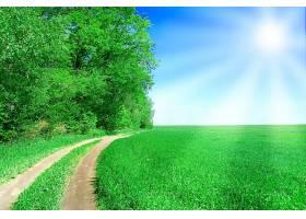 阳光照耀下的绿色田野里的土路_94972601