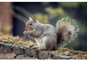院子里一只松鼠的选择性对焦镜头_1130123001