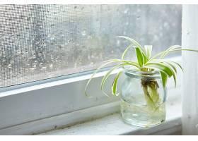 雨天在窗台上的玻璃瓶里种绿色室内植物_1018636701