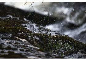 雨雪交织的美丽景色飘落在绿色植物上_885793901