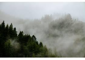 雾中美丽的森林群山_767786101