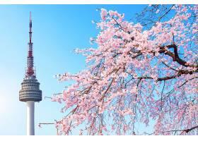 首尔塔和粉红色的樱花春天的樱花季节韩_1159954901