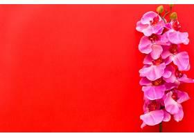 鲜艳的粉红色兰花插在红色背景上_409380101