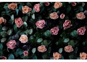 鲜花墙背景配以令人惊叹的粉红色和珊瑚色玫_494398701