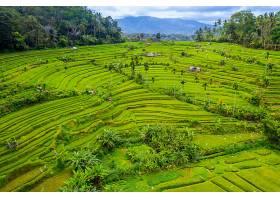 印度尼西亚巴厘岛的梯田鸟瞰_1130642901