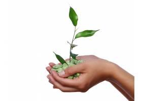 手中的绿色植物_625502001