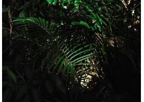 棕榈叶的绿色森林丛林_298768001